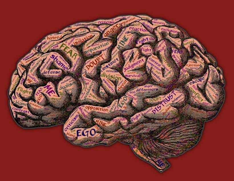 image of brain with names of states of mind (fear, judgement, etc.) written on it