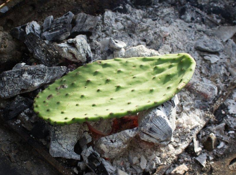 cactus paddle